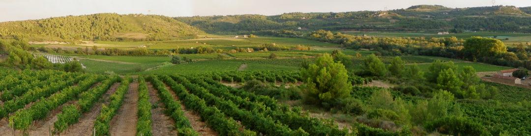 Viranel, vin du Languedoc, entre tradition et modernité